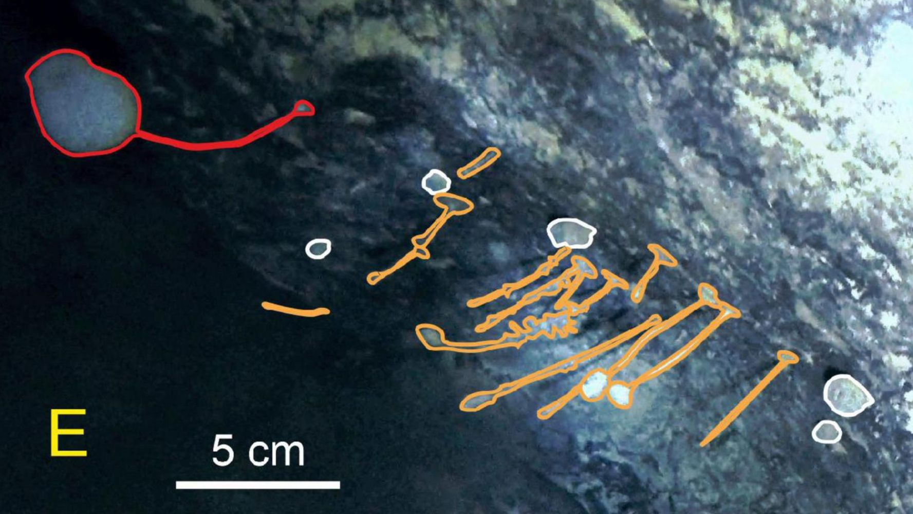 Las formas de vida «no deberían estar allí» encontradas por científicos debajo del hielo antártico